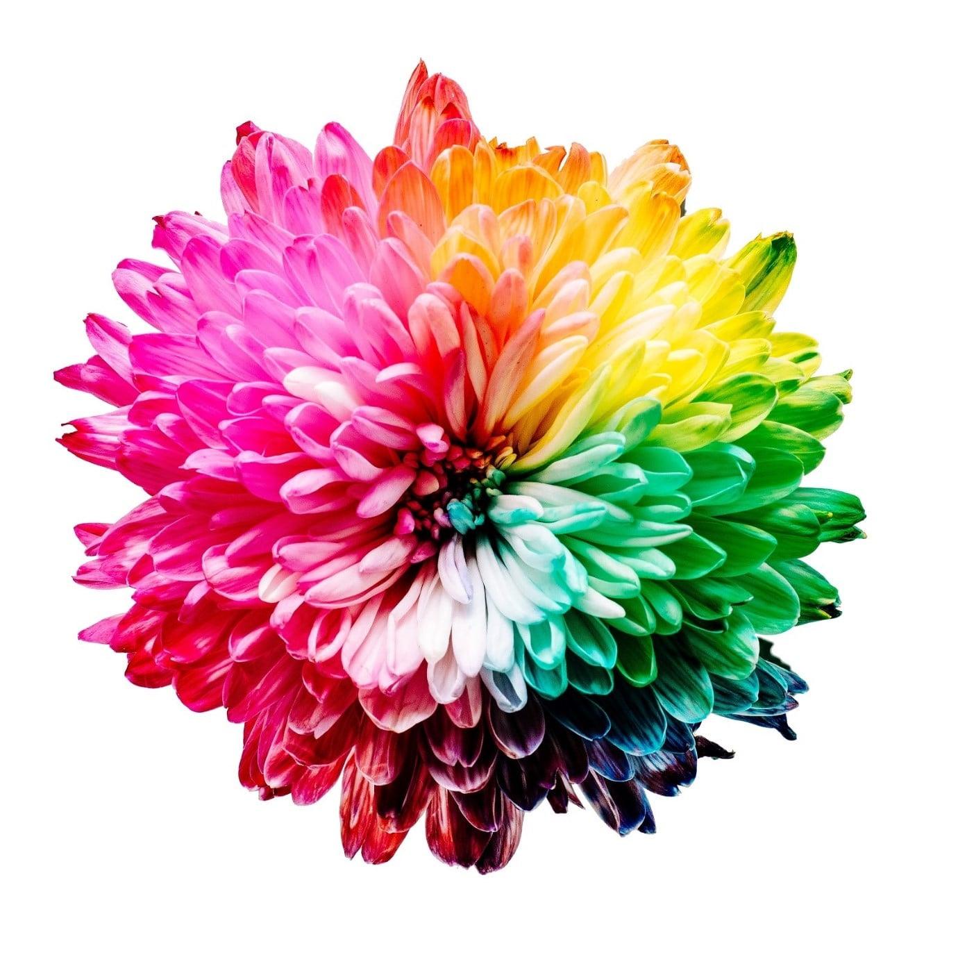 identité marque couleurs